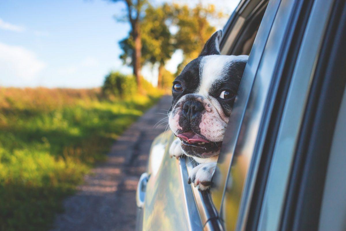 Czerwcowy długi weekend przed nami! Pamiętaj o bezpieczeństwie na drodze!